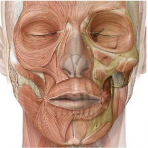 Orofacial Myofunctional Therapy